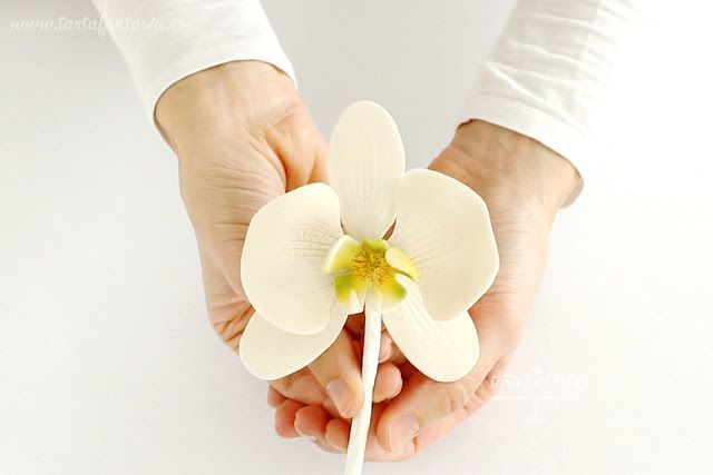 Cómo hacer una Orquídea Mariposa de azúcar